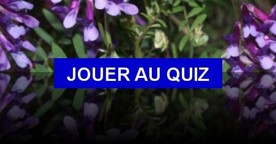 CAP fleuriste - Ile de France