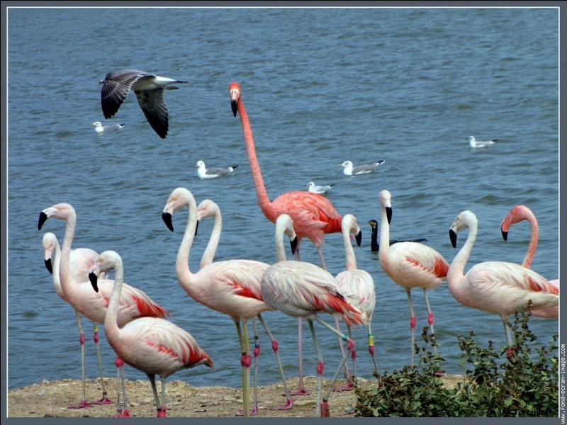 Quizz Connais-tu les noms de ces oiseaux ? - Quiz Oiseaux, Noms