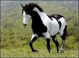 Ce cheval a une robe ...comparée à celles de ses amies.
