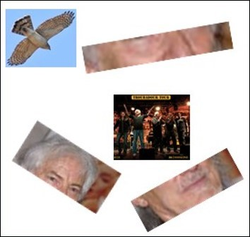 Quel est ce chanteur qui s'est fait voler sa colombe par un épervier ?