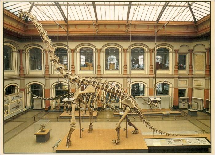 De cette expédition, plus de 250 tonnes d'os furent embarquées pour l'Allemagne, parmi eux plusieurs squelettes qui ont servi à la reconstitution du Giraffatitan exposé au Museum de Berlin. Aujourd'hui encore, il est...