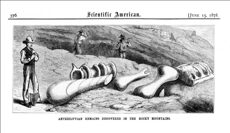 Pour éviter de se faire dérober trop de trésors paléontologiques par des chercheurs travaillant pour des musées aux Etats-Unis, le gouvernement canadien finança de grandes expéditions pour ses plus talentueux chasseurs fossiles. Cette époque est parfois appelée...
