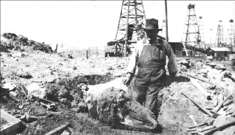 William Cutler ne fut à l'époque pas la seule personne à découvrir des fossiles de dinosaures avec des restants de peau. Charles Sternberg (1850-1943), un autre paléontologue canadien, réussi à trouver entre 1908 et 1916...