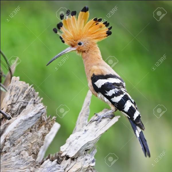 Quizz les oiseaux des jardins quiz oiseaux for Oiseau longue queue ventre jaune