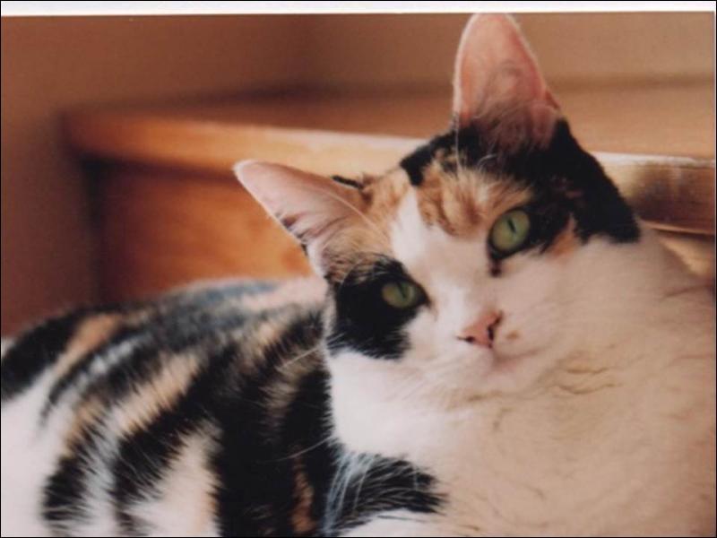 D'après une expression, la nuit tous les chats sont...