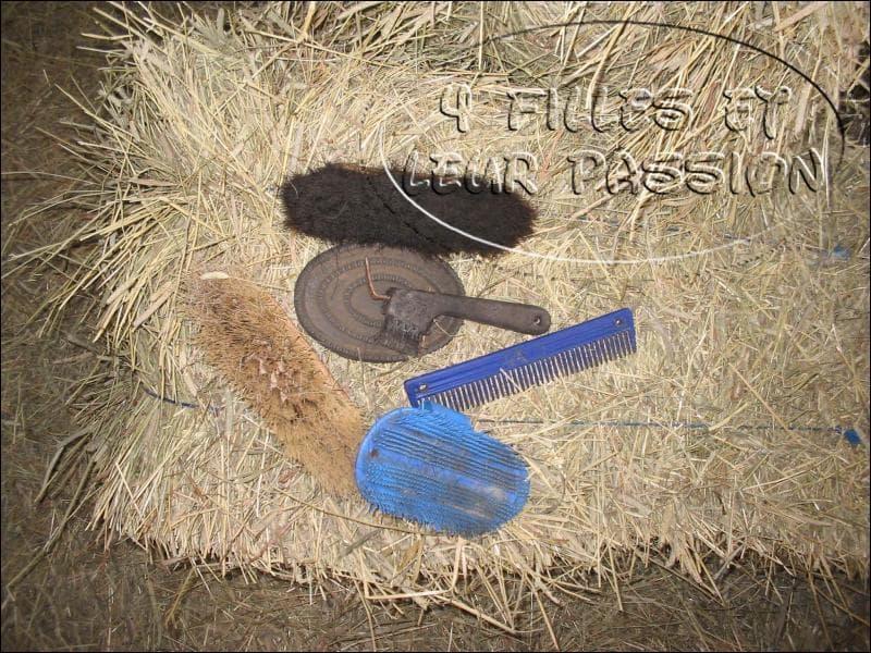 Quel est l'ordre des brosses lorsque l'on brosse un poney ?