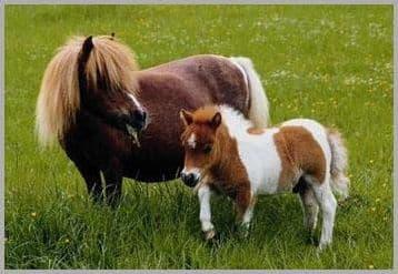 Tout sur les poneys