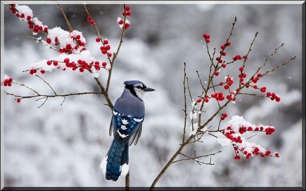 """Qui chantait """"Un soleil palissant jette encore sa lumière sur un oiseau errant qui fuit devant l'hiver, restera-t-il encore un peu de notre amour au premier vent du nord, aux premiers mauvais jours"""" ? (C'était bien avant le BAC G1)"""