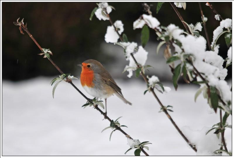 Quel est cet oiseau dans ce paysage d'hiver ?