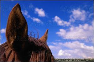 Comment se nomme cette partie du cheval ?