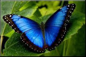 Retrouvez le nom de cet insecte !