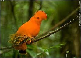 C'est un bel oiseau mais comment s'appelle-t-il ?