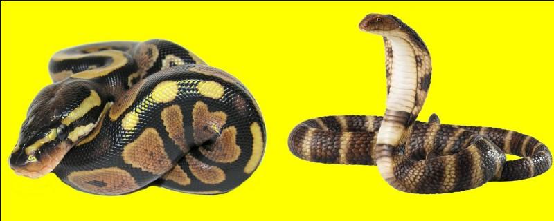 """Si je vous dis : """"Le cobra"""". Sur quel """"buzzer"""" aller-vous appuyez ?"""
