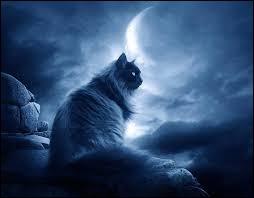 Complétez - La nuit, tous les chats sont...