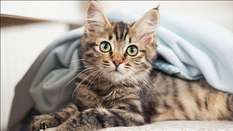 Quel est le nom du chat de Martine ?