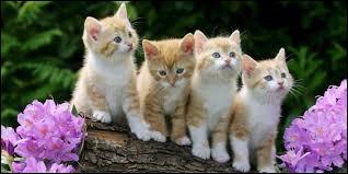 Lequel de ces animaux préfères-tu ?