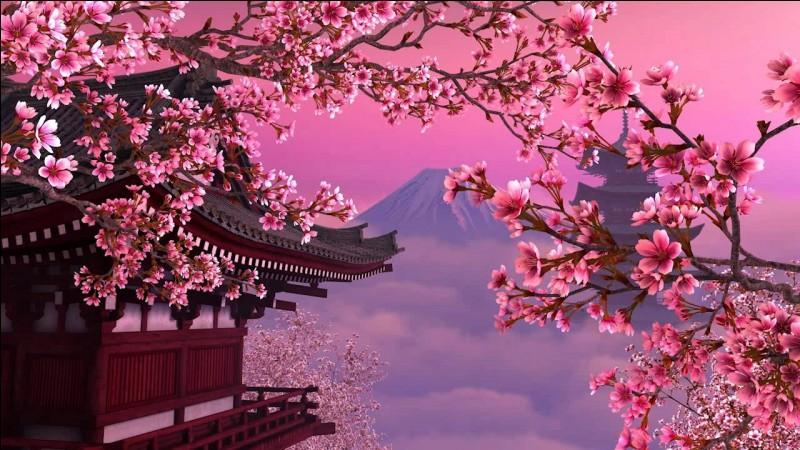 "Que signifie le terme ""sakura"" en français ?"