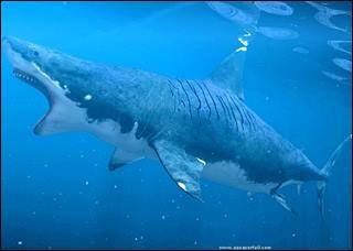 Quel est l'ancêtre du grand requin blanc ?