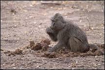 Certains animaux se nourrissent de matière fécale. Cette pratique a un nom ; quel est-il ?