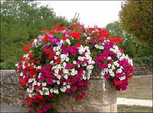 Les amoureux de nature commençaient à désespérer ! Aussi je leur présente ce magnifique bouquet de fleurs pour orner le jardin !
