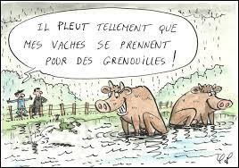 """Il pleut comme vache qui pisse et il y a même des """"grebons"""" qui tombent !"""