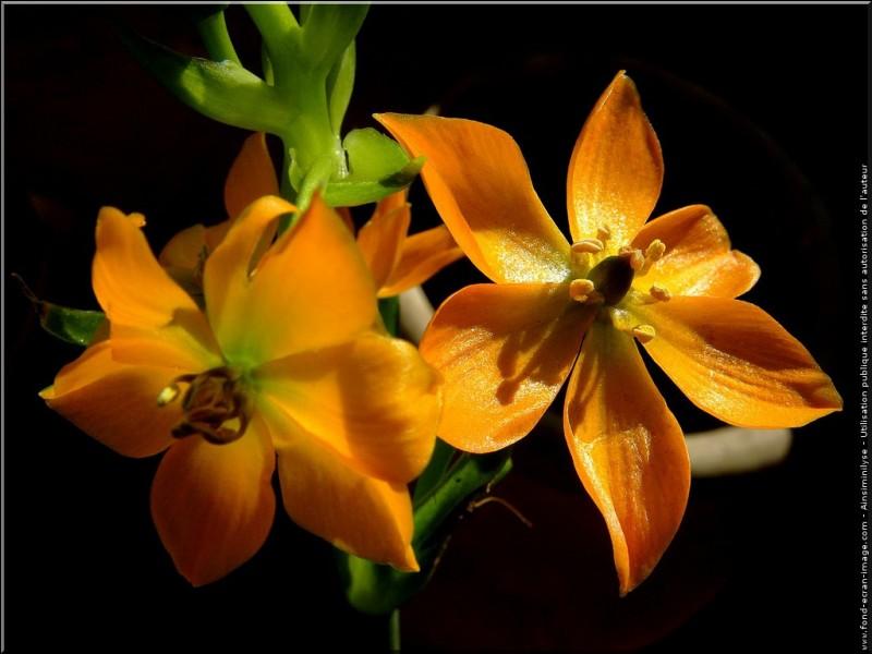 Je vous laisse admirer ces superbes fleurs colorées :