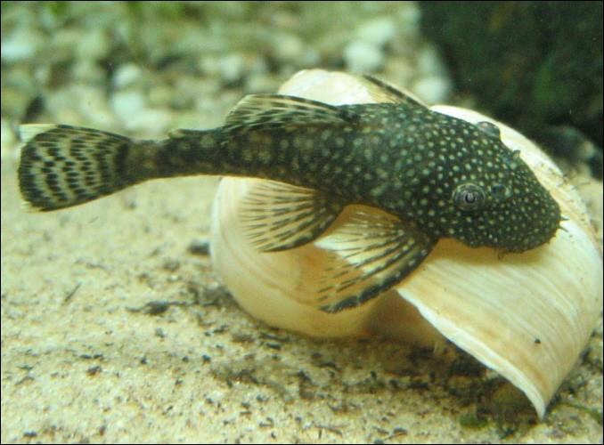 Quizz les poissons de nos aquariums quiz poissons for Nettoyeur aquarium poisson