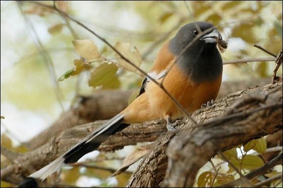Les oiseaux ont des narines !