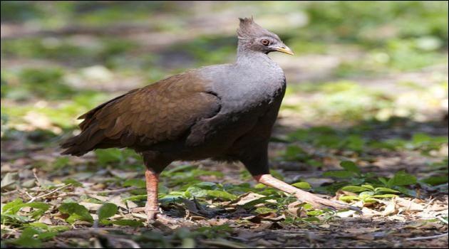 Certains nids d'oiseaux peuvent peser 50 tonnes !