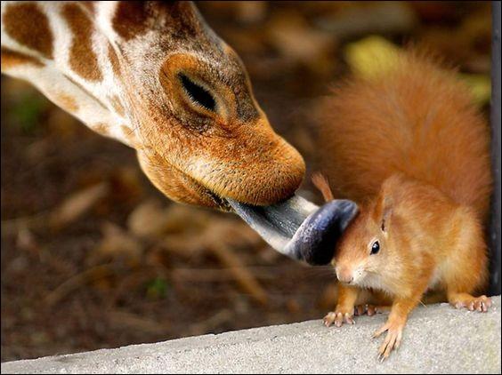 A quel animal appartient cette langue bleue ?