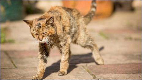 Quel âge avait la plus vieille chatte au monde ?