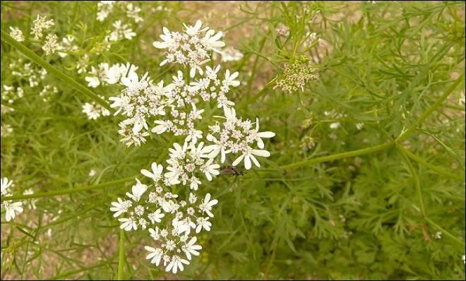 Quiz 39 en fleurs n 3 quiz fleurs plantes for Plante urticante