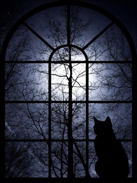 J'aime la nuit !