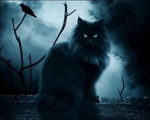 """J'y vois très bien la nuit, et je suis """"un chat"""" :"""