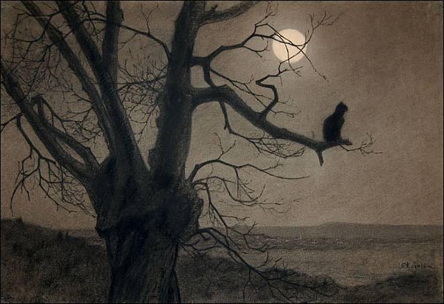 """C'est une """"nuit claire"""" :"""