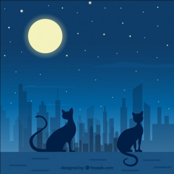 """C'est """"la pleine lune"""" : :"""