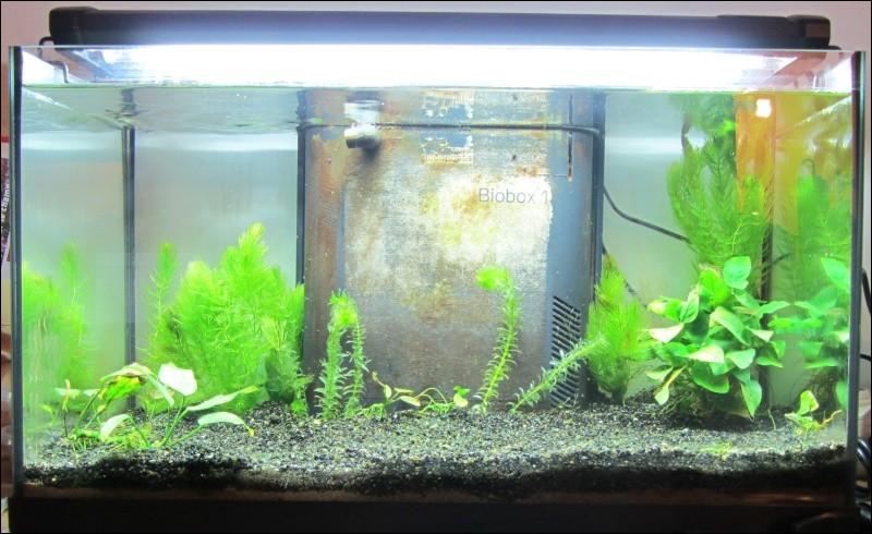 quizz l aquarium et les poissons quiz animaux poissons vie