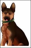 Cookie est le chien de/d'...
