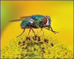 Quizz pourquoi mais pourquoi quiz culture generale - Pourquoi les mouches piquent ...