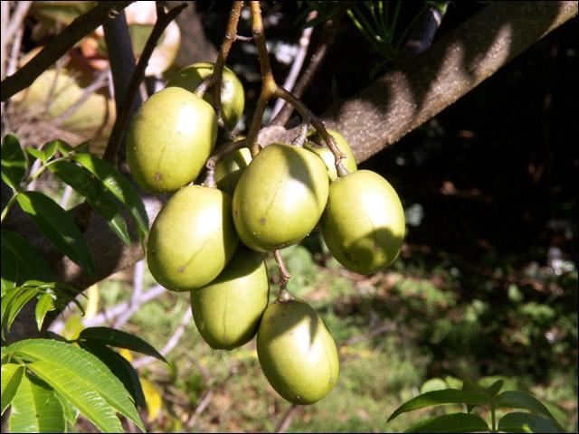 Un fruit peut-être peu connu, mais bon, il fallait bien corser les choses. Quel est ce fruit ?