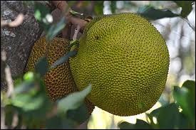 Ce fruit se prononce comme un prénom.