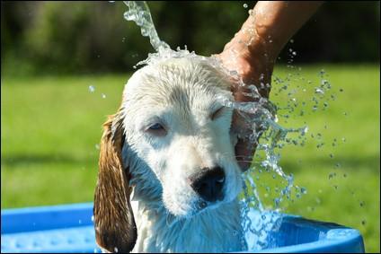Combien de fois, par mois, faut-il laver son chien ?