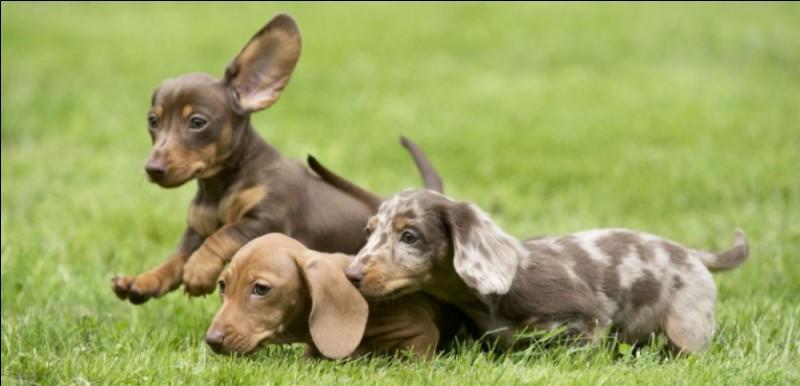 Pendant combien d'années les chiens vivent-ils en moyenne ?