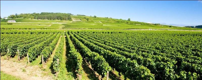 La ville de Beaune est réputée pour son vignoble. Dans quelle région viticole se trouve-t-elle ?