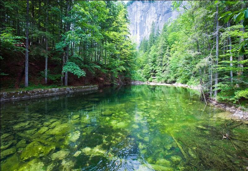 """Où se trouve cette magnifique forêt verte, justement surnommé """"Le Lac Vert"""" ?"""