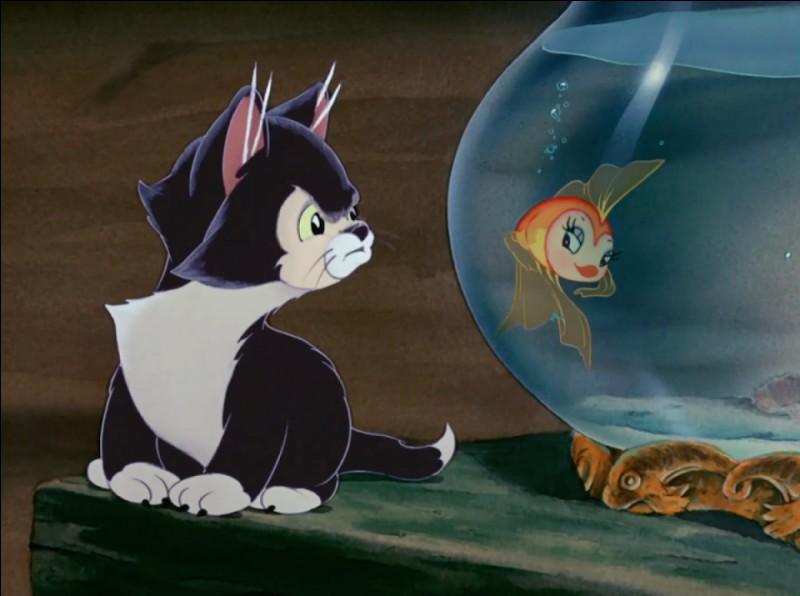 Figaro, dans « Pinocchio » l'est comme un tigre. Mais, au fait, comment est-il ?