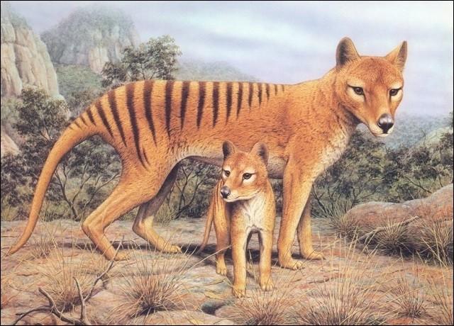 Le tigre de Tasmanie est un mammifère carnivore. Dans quelle catégorie classez-vous cet animal ?