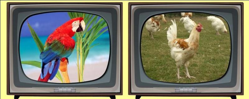 """Qui est """"Pouic Pouic"""" dans le film joué par Louis de Funès en 1963 ? Éteignez la mauvaise télévision !"""