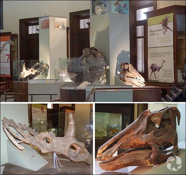 Von Huene a vécu pendant plus de 94 ans. Il demeura très actif jusqu'à la fin de sa vie. Cependant, une bonne partie des dinosaures qu'il a nommés l'ont été dans les années 20. On l'avait à l'époque embauché pour identifier les os qui envahissaient le sous-sol du museum de La Plata, qui se trouve...