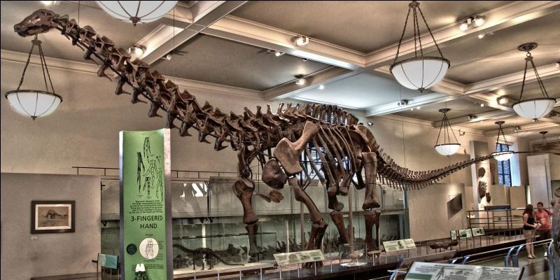 Le vœu d'Osborn fut exaucé par l'arrivée en 1904 d'un squelette d'Apatosaure au musée d'histoire naturelle de New York. Cependant l'animal préhistorique fut pendant très longtemps appelé par erreur...